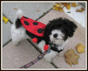Sporting my Ladybug costume for Halloween