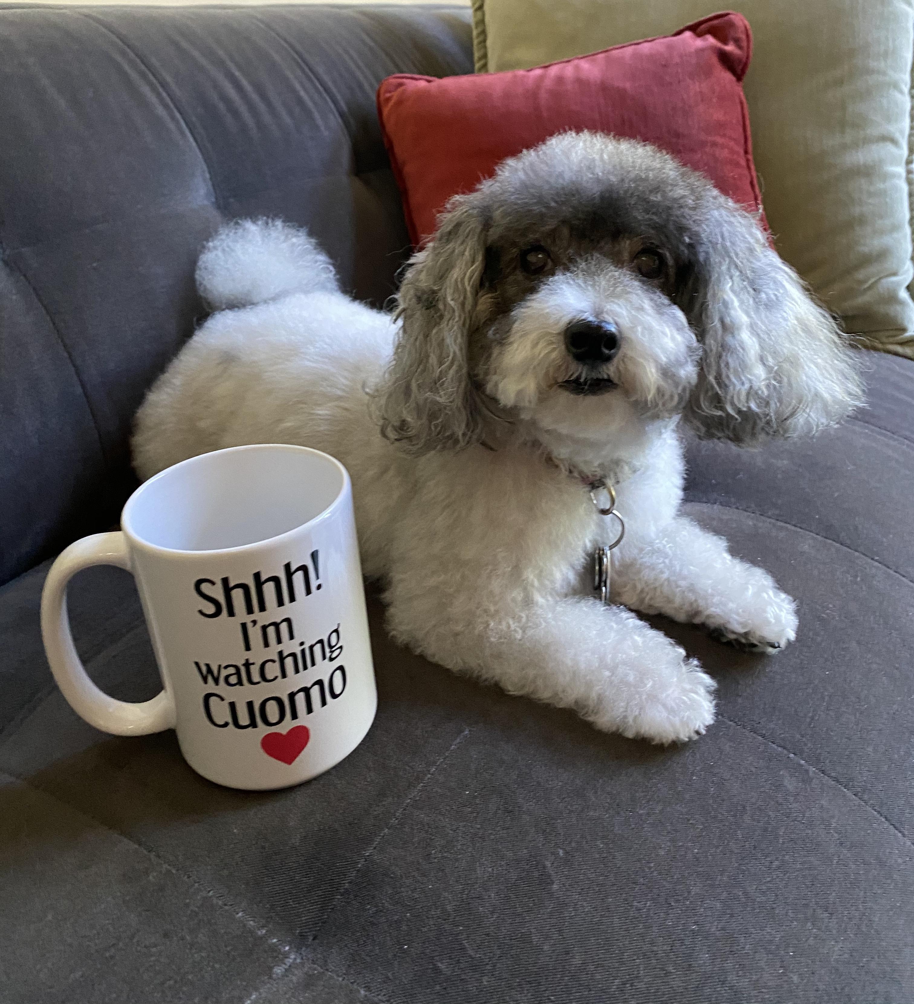 Maggie Mae Pet Pandemic Artilce photo